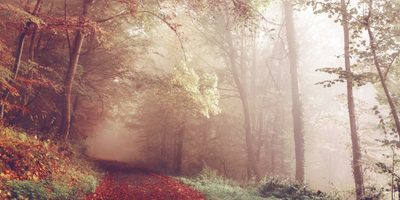 Moving from Summer to Autumn, from being overstretched to slowing down